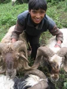 nepali_shepherds_04