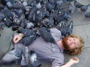 too_many_pigeons