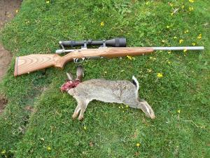 Rabbit shooting vermin varmint control